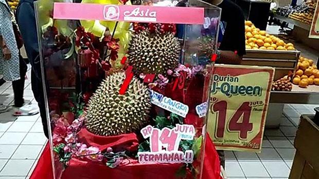 Terungkap Isi Durian J-Queen Seharga Rp14 juta