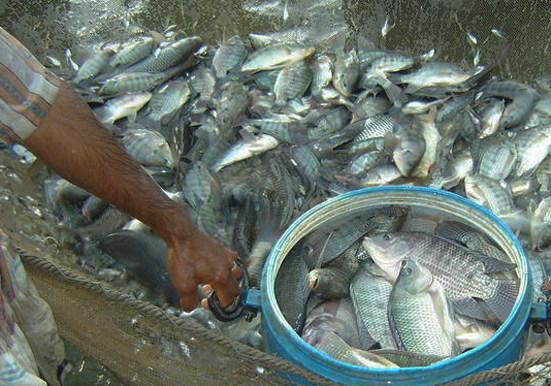 Kotamobagu Wilayah Potensial Bagi Investor Perikanan
