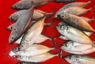 Akibat Angin dan Bulan Terang, Harga Ikan di Pasar Serasi Meroket.